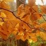 gwt1-autumn.jpg