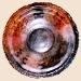 se-15_shell-plate.jpg