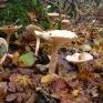 gwt1-fungi.jpg