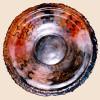 Shell-like plate
